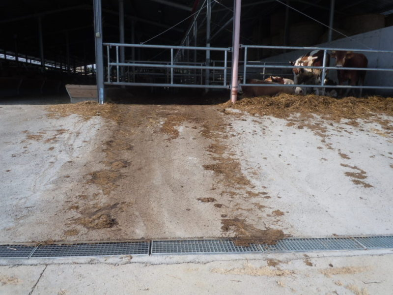 stalle in ungheria 800x600 - B125 o C250 - Canali grigliati normali in cemento - drenaggio-superficiale-delle-acque-